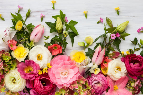 Spring flowers on a white wood backdrop