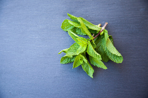 peppermint for respiratory health