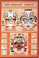 Reflexology Wall Chart