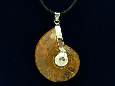 Polished Ammonite Fossil With Sterling Silver Pendant Holder