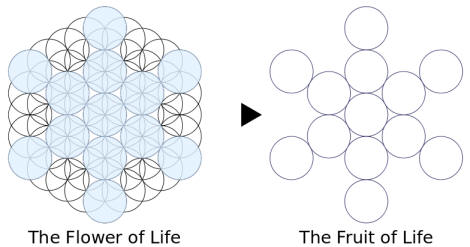 The Flower of life The Fruit of life