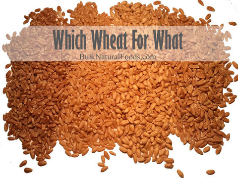 """From left to right: """"Bronze Chief"""" Hard Red Wheat, """"Prairie Gold"""" Hard White Wheat, Soft White Wheat, Spelt."""