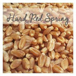 Bronze Chief Hard Red Spring Wheat Berries, 50 LB Bag