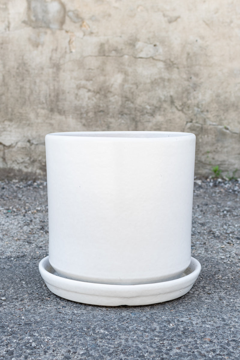 Matte white 10 inch cylinder planter sits in front of a concrete wall