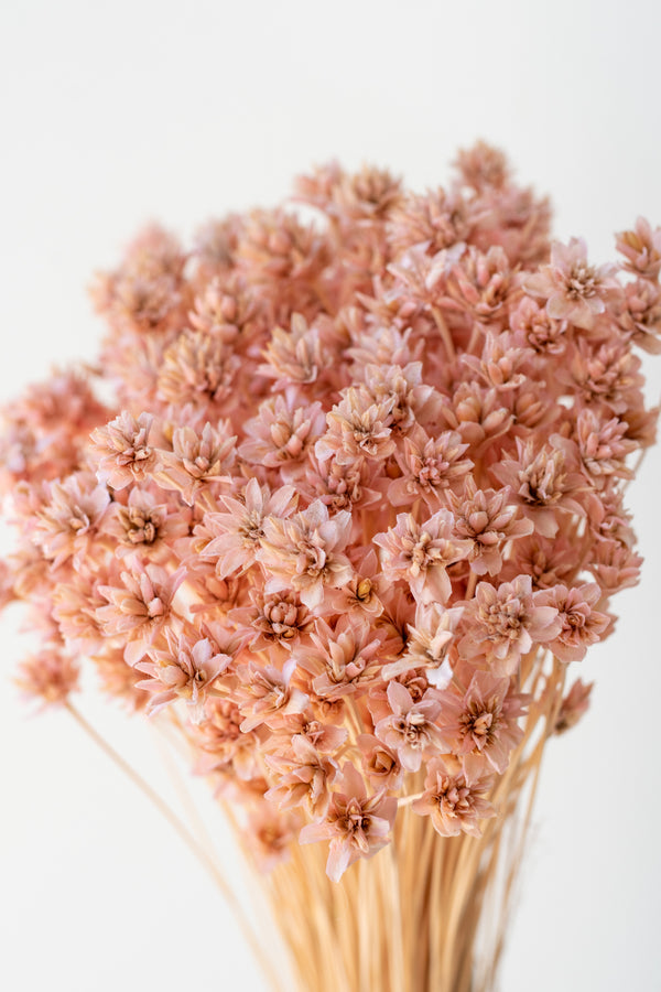 Hill Flower Pink Pastel Preserved Bunch