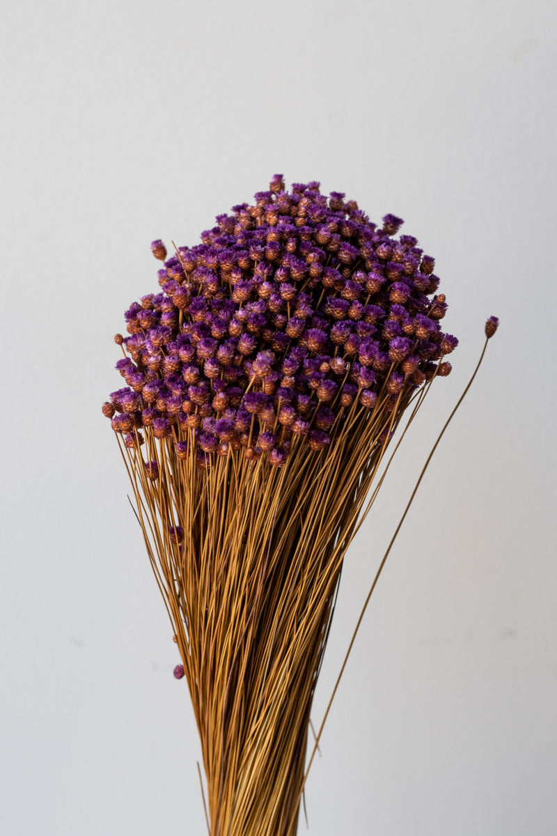 Dried bunch of purple Jazilda flowers against a white background