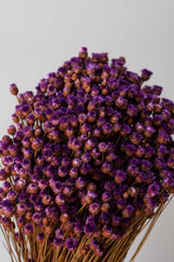 Close up of dried bunch of purple Jazilda flowers against a white background