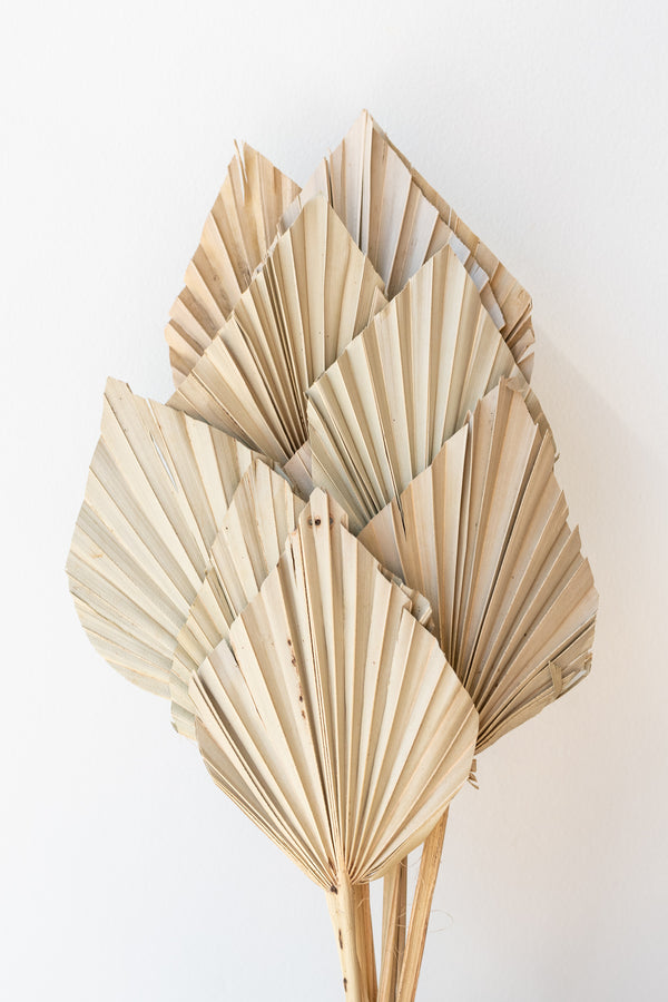 Preserved natural dried palm spears against a white wall