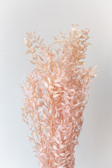 Pastel pink dried Ruscus against a white wall