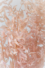 Close up of pastel pink dried Ruscus against a white wall