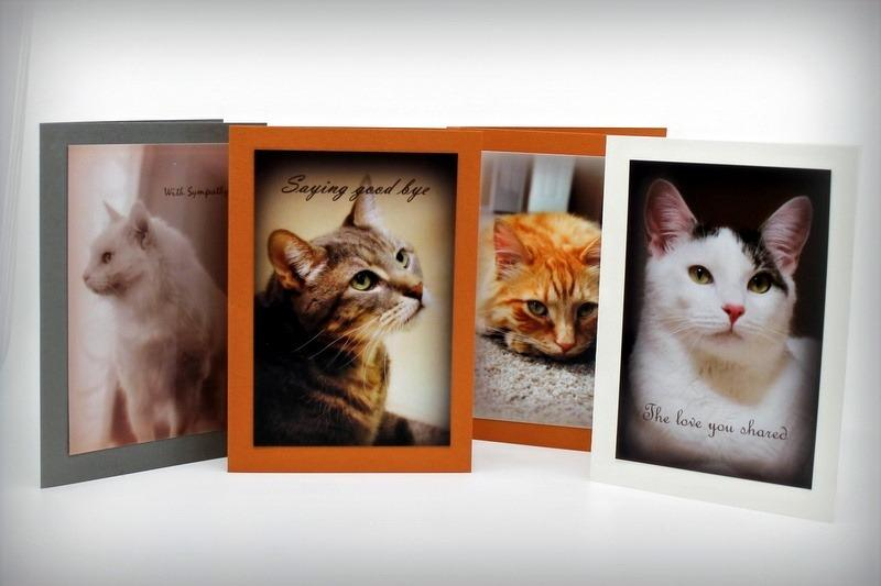 Pet Sympathy Cards Assorted Feline (set of 4)