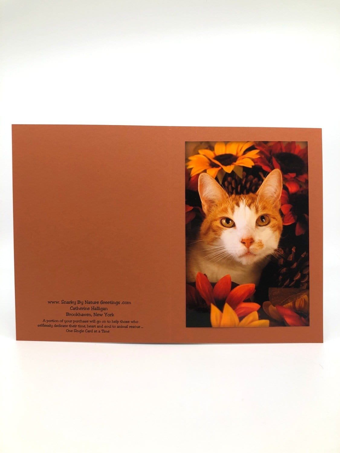Thanksgiving Cards Blank (set of 5)