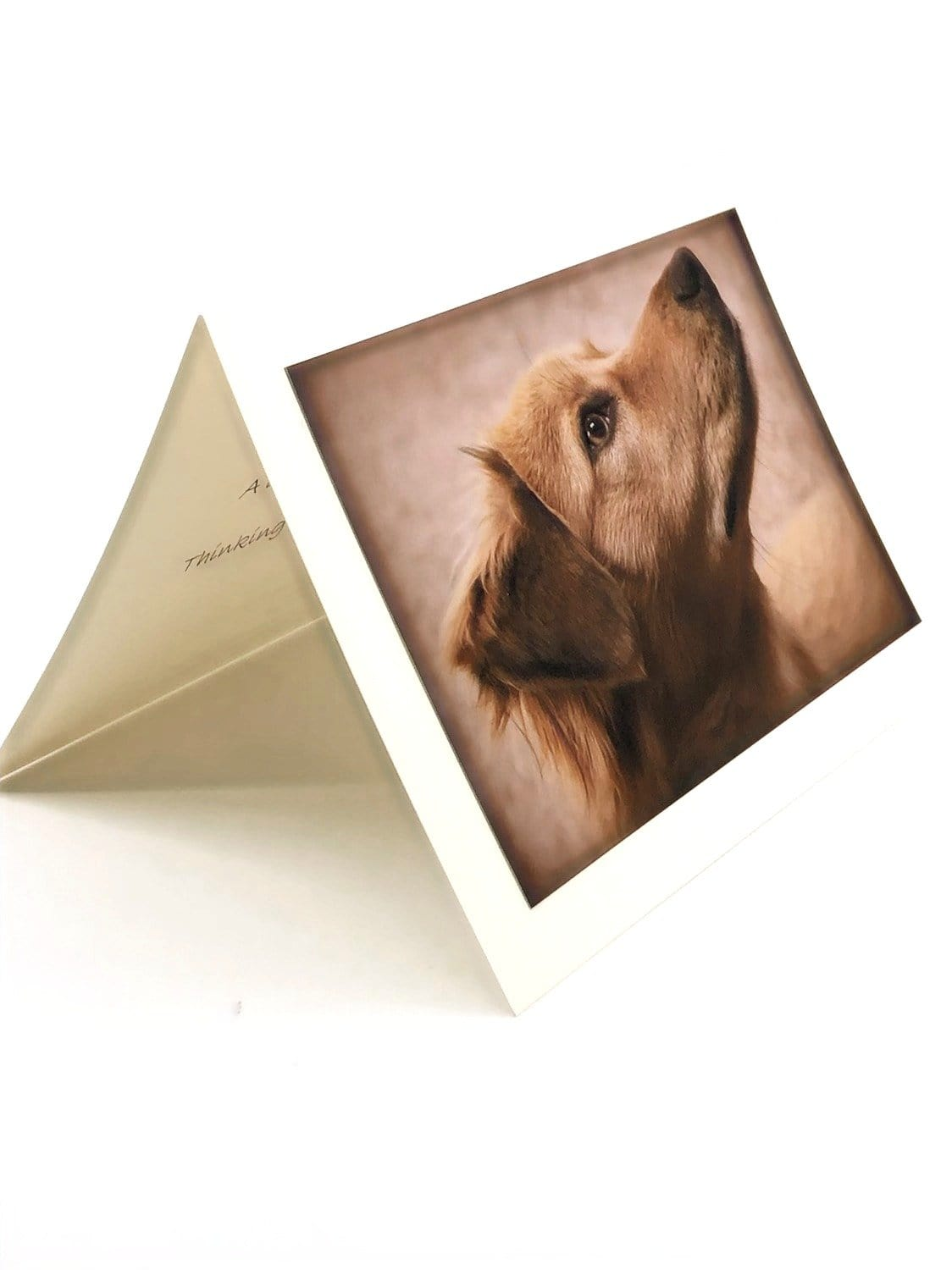 Pet Sympathy Cards Assorted Canine (set of 3)