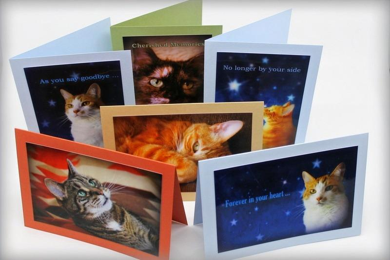 Pet Sympathy Cards Assorted Feline (Set of 6)