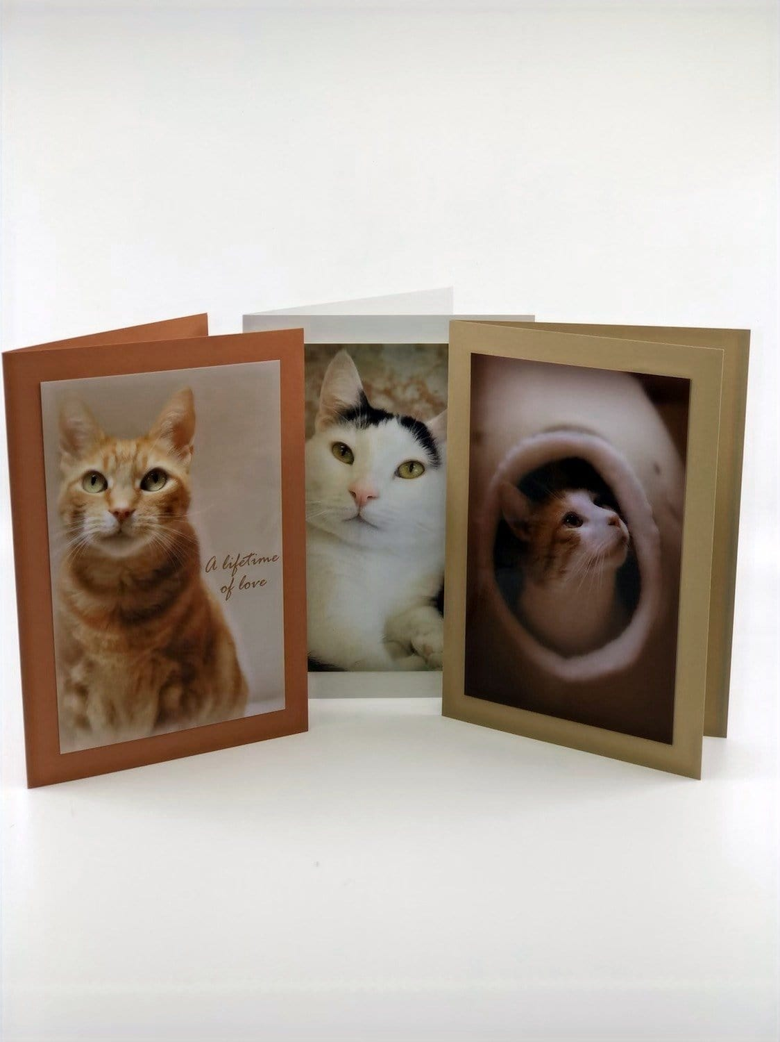 Pet Sympathy Cards Assorted Feline (set of 3)