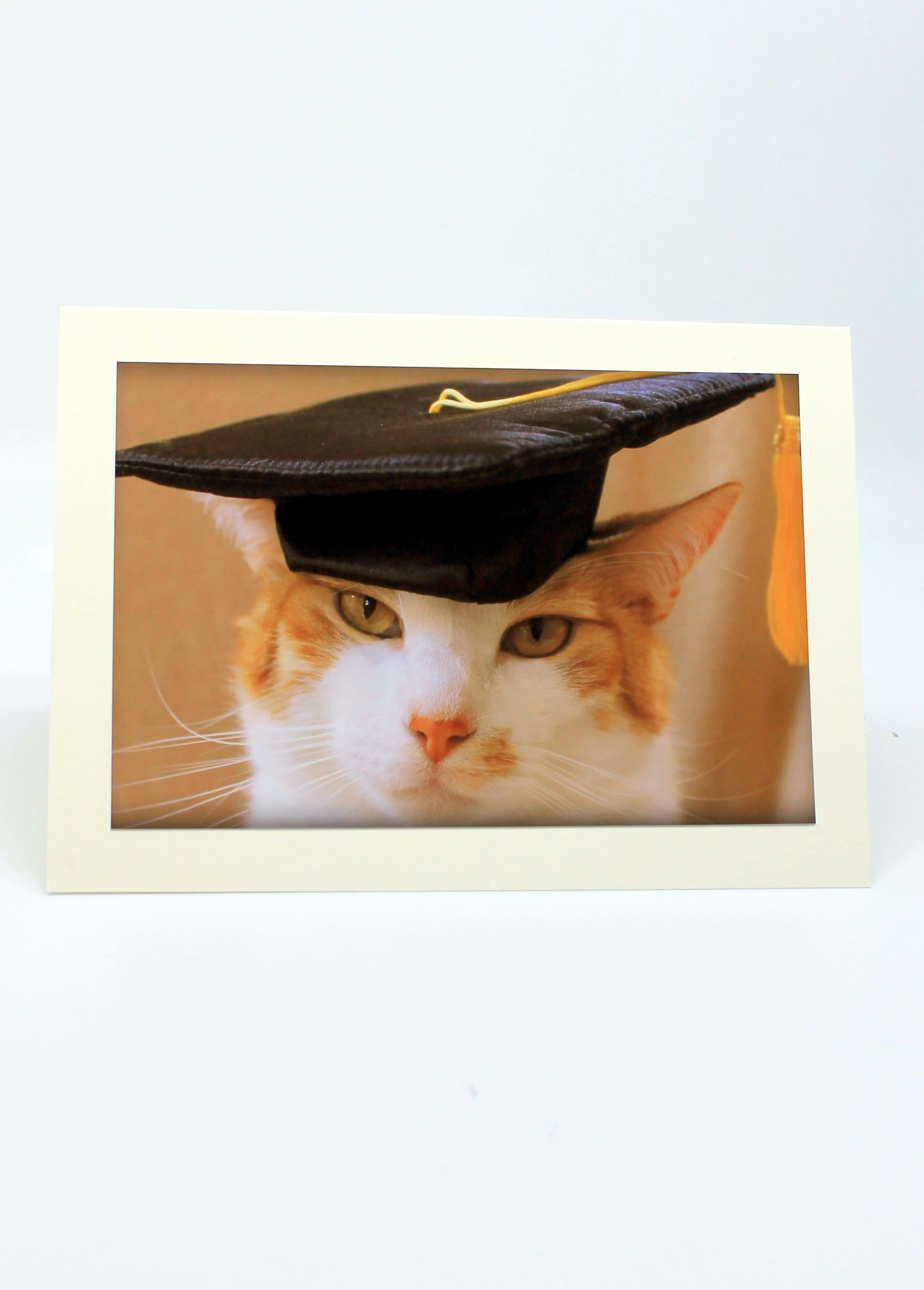 Graduation Cards Assorted Blank (set of 3)