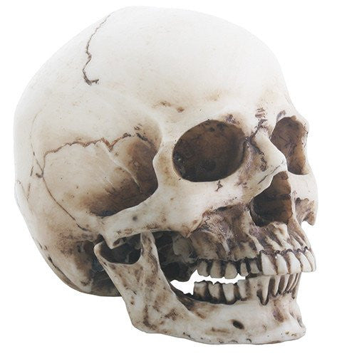 Small Skull Head (Removable Jaw) - DeadRockers