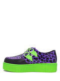 Purple Leopard Krypt Creeper