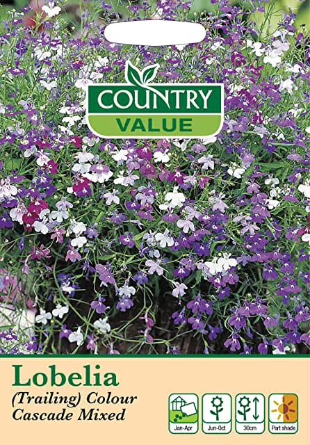 Lobelia colour mixed Seeds
