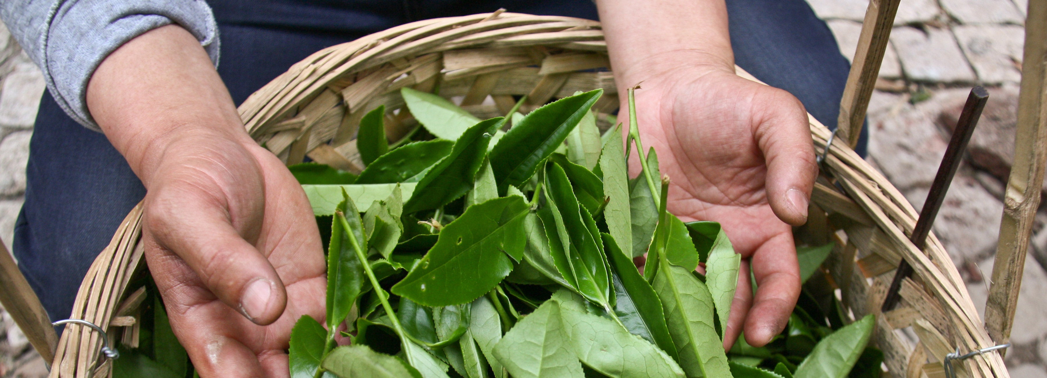 How is Tea Made - All about the Process