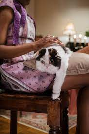 cat behaving in a person's lap