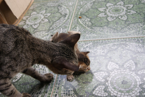 mother cat playing with her cat