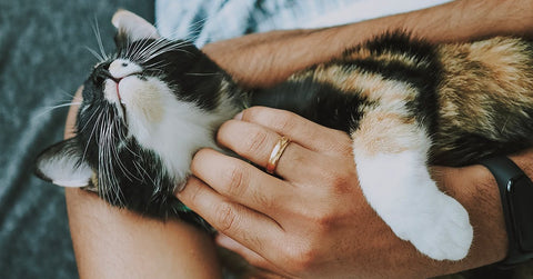 taking care of your cat