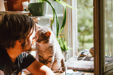 cat trust with human