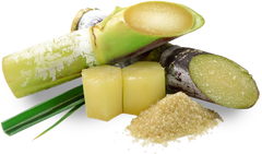 Sugar cane to indicate vegan squalane, which is derived from sugar cane.