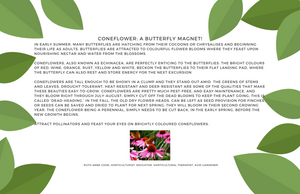 Coneflower: A Butterfly Magnet!