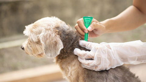 Flea or Tick Prevention Products