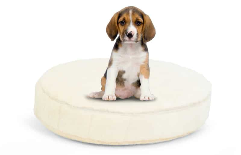 Round Cuddler Pet Bed - Rabble - best dog bed in egypt for small dogs