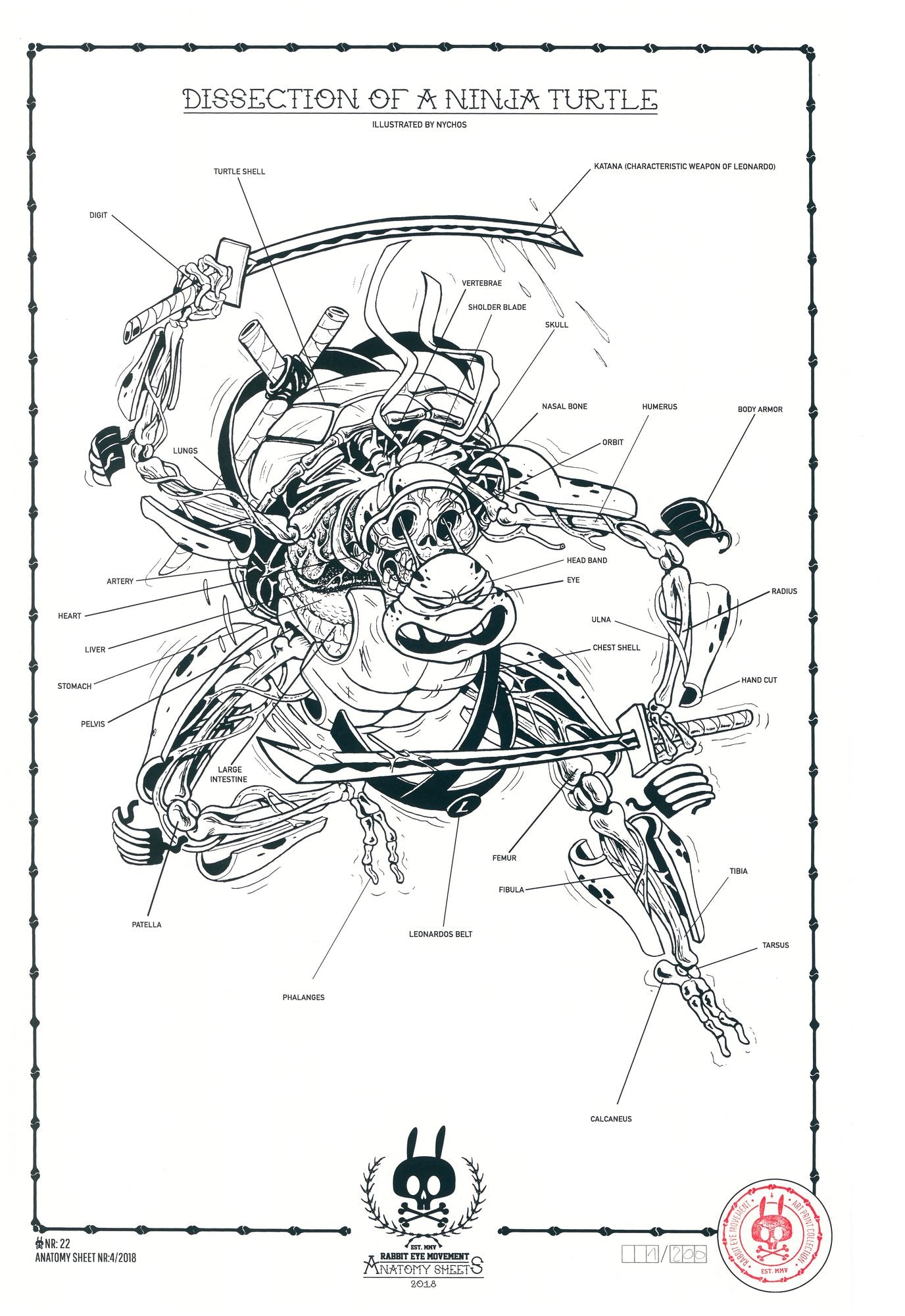 Dissection of Ninja Turtle: Anatomy Sheet – Outré Gallery