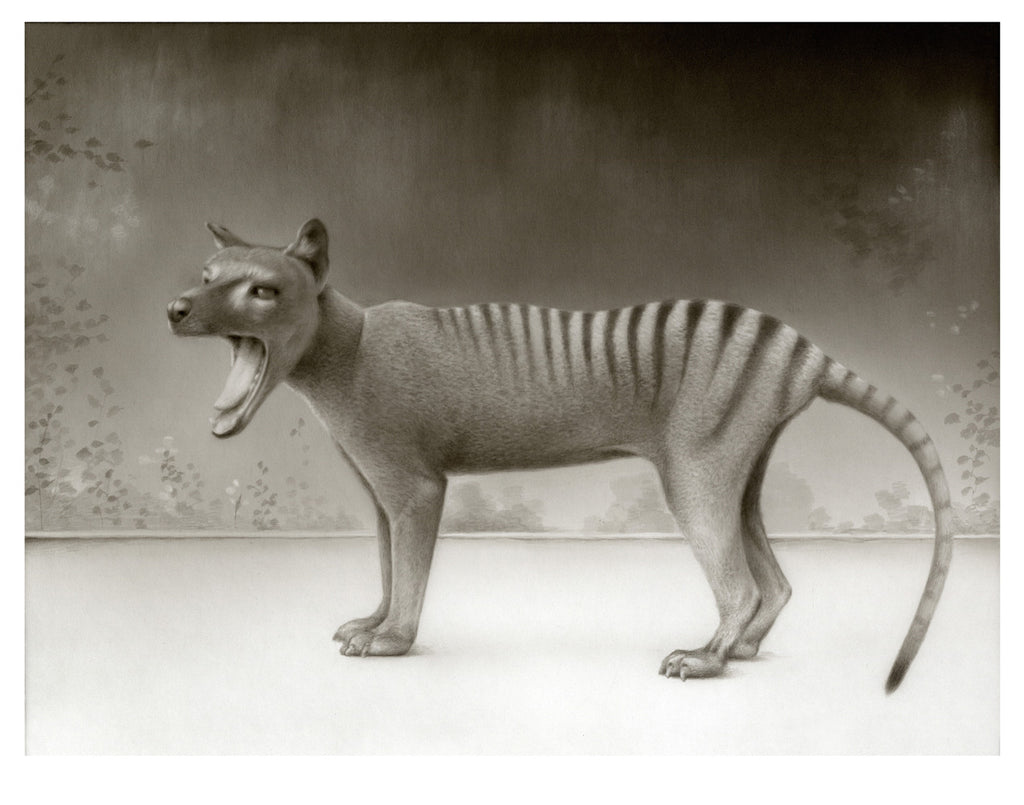 Ode To Thylacines
