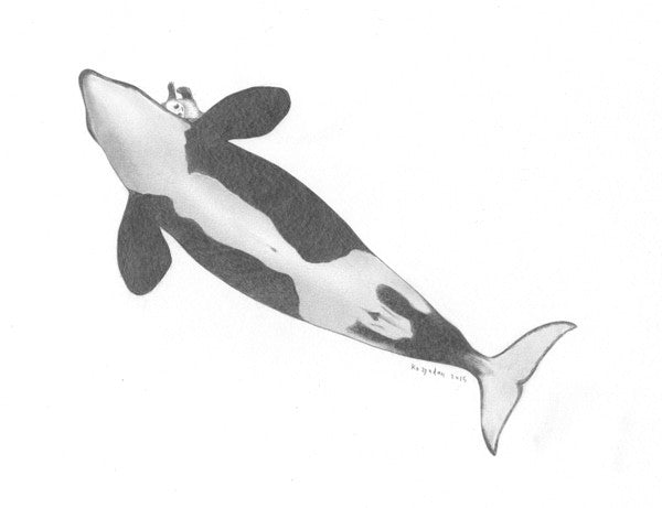 Belly Orca
