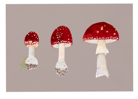 Three Toadstools