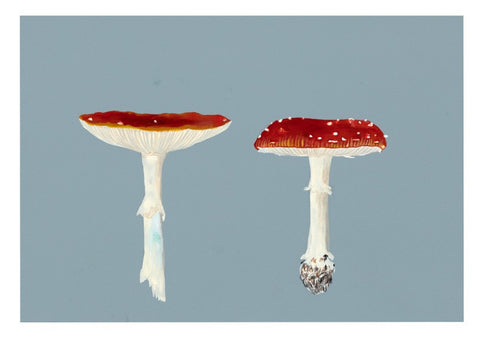 Two Toadstools on Blue