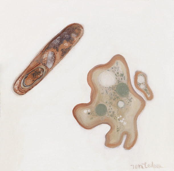 Bacteria and Amoeba