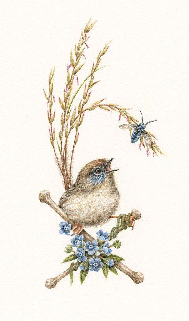 Mallee Emu-wren (Female)