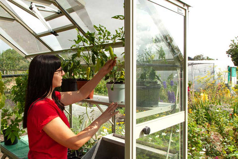Ellen Mary checking on Chilli plants in her Rhino Greenhouse
