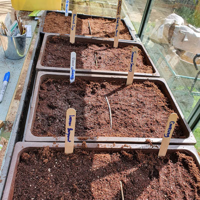 Seed trays with compost on Rhino greenhouse staging