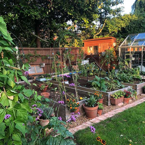 3 wooden raised beds leading back to a greenhouse. The beds are surrounded by potted plants, flowers and canes.
