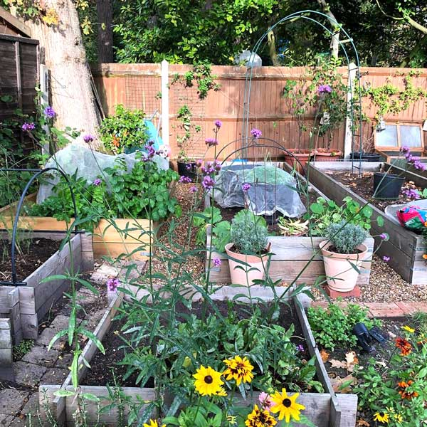 Assortment of wooden raised beds, with yellow and purple flowers in the foreground.