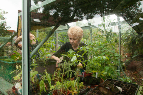 Lilian at work potting up in the Rhino greenhouse at Grapes Hill Community Garden