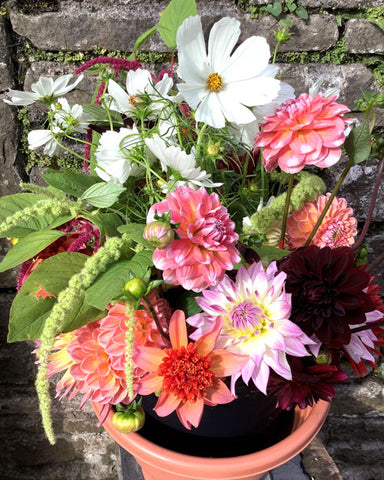 A bucket of flowery loveliness off to a customer - full of dahlias, cosmos and amaranth