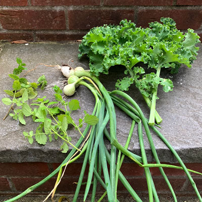 picked from the garden - kale, spring onions, lemon balm and mint