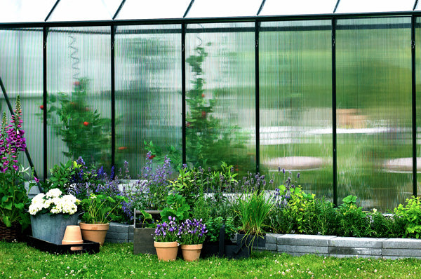 Side of greenhouse with polycarbonate glazing. Pots of herbs and purple flowers sit along the outside and blurred tall plants can be seen behind the plastic wall of the greenhouse