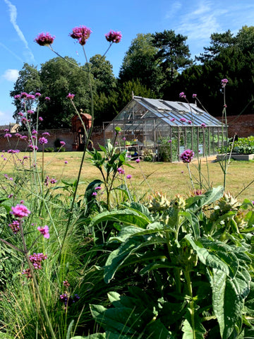 Rhino Greenhouse with verbena in the foreground