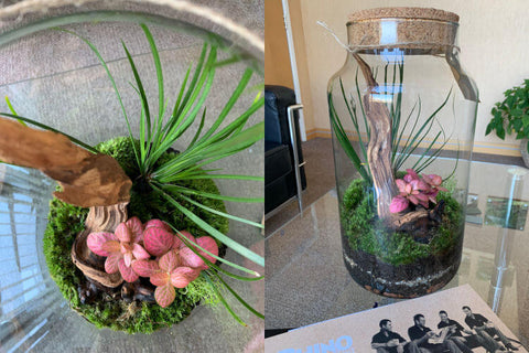 Terrarium from Scaped Nature Rhino Greenhouses Direct