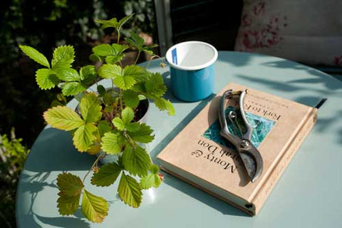Secateurs on table with mug and small strawberry plant
